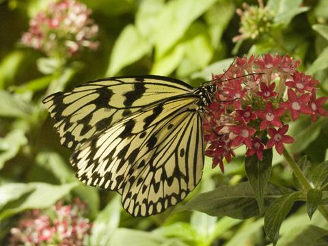 flutterby1.jpg