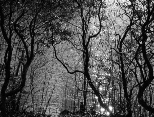 branchesweb.jpg