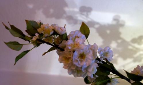 flowershadowweb.jpg