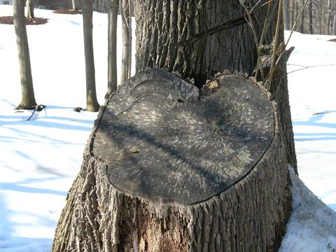 hearttree296.jpg