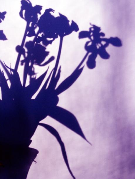 shadowfallsblueweb.jpg