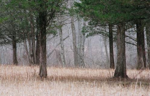 treesweb1.jpg