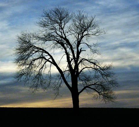 treeweb.jpg