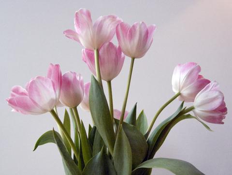 tulips2web.jpg