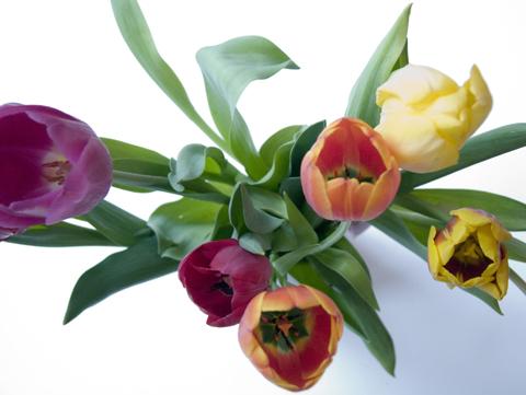 tulips5web.jpg