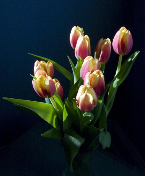 tulipsweb1.jpg