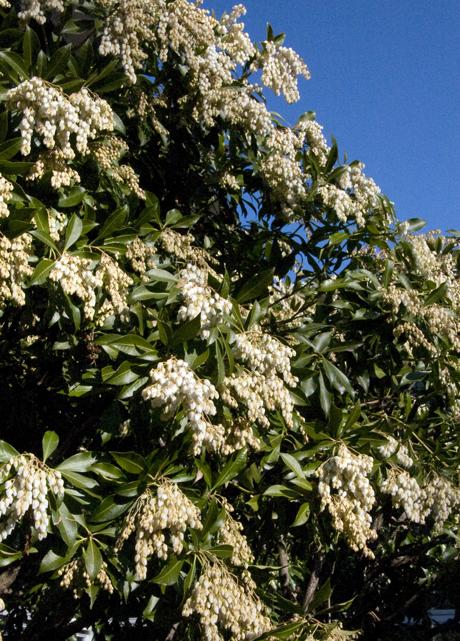 whiteflowersweb.jpg