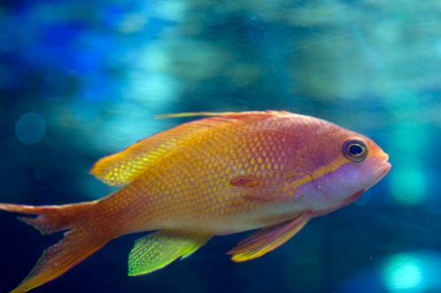 w-goldfish.jpg
