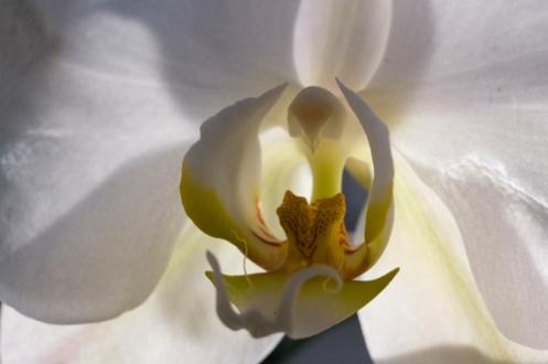 w_orchid.jpg