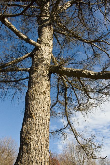 big_tree_blue_sky