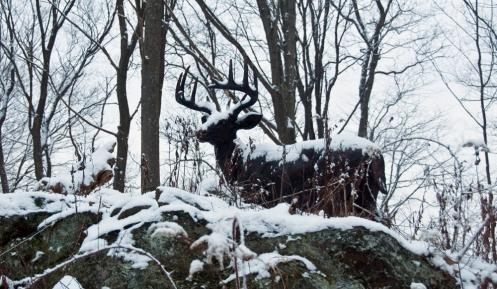 snow_buck