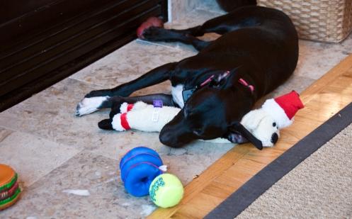 toy_nap