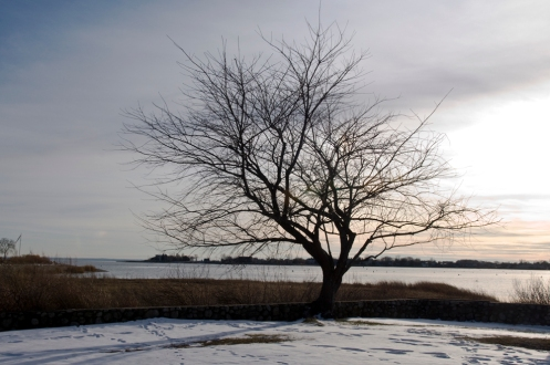 longshore_tree