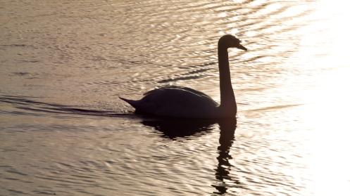 swanset