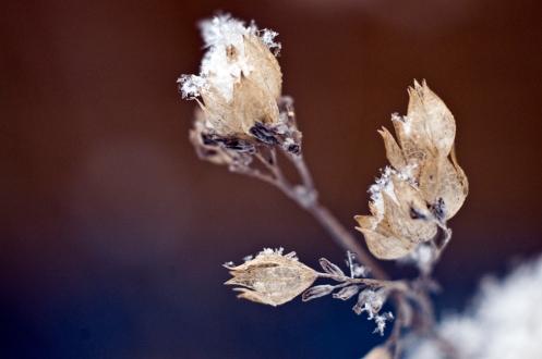 winter_buds_2