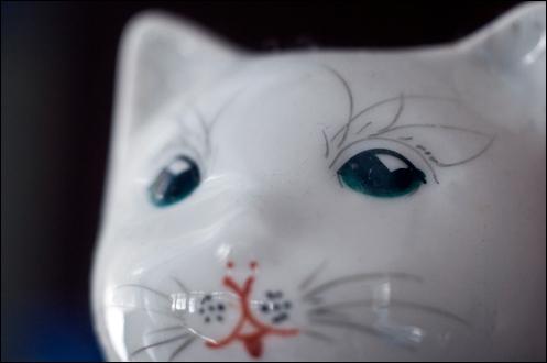 china_cat_2