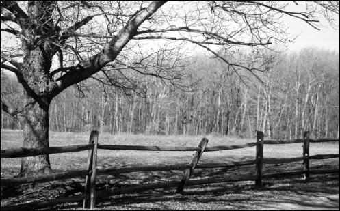 fence_tree