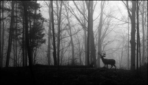 deer_in_mist