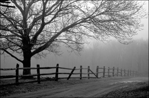 fence_fog