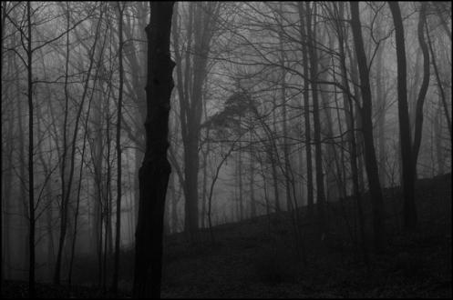 misty_woods